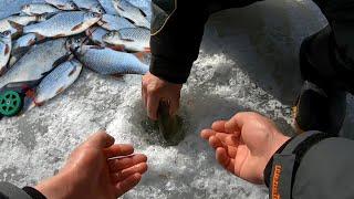 ВЫ ПОСМОТРИТЕ НА ЭТУ РЫБАЛКУ ЛОВЛЯ ТАРАНИ СИНЕЦ ЛЕЩ рыбалка весной со льда на снасть гирлянду