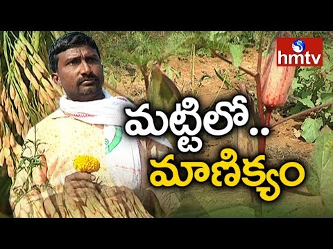 Farmer Srinivas Success Story | Natural Farming | hmtv Agri