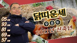 2021년 닭띠는 올해 선택만 잘하면!!! | 신축년 닭띠운세 05년생 93년생 81년생 69년생 57년생