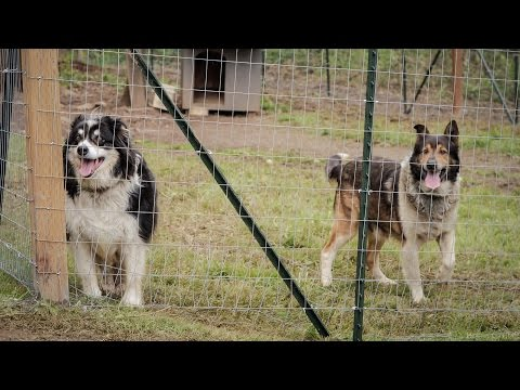 Fences For Fido: Bella And Spike