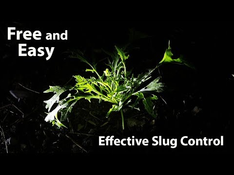 Effective Slug Control Method for small-medium Gardens (100% Free and Organic)
