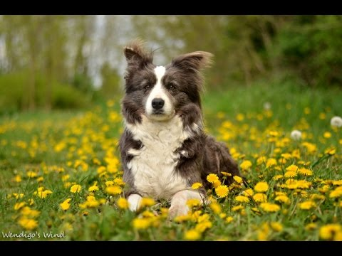 10 Best Smartest Dogs Breeds