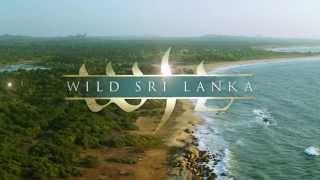 Wild Sri Lanka - Coast of Giants Teaser