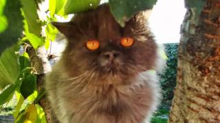 Памяти коту