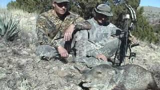 Arizona Javelina Hunting Archery with Arizona Guided Hunts - 2002