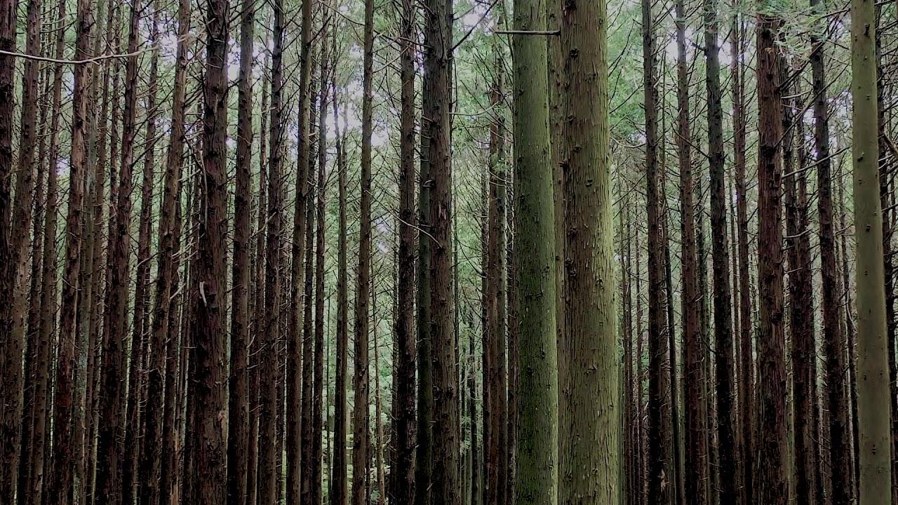 [ASMR JEJU] 숲