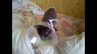 Кот с воротником!