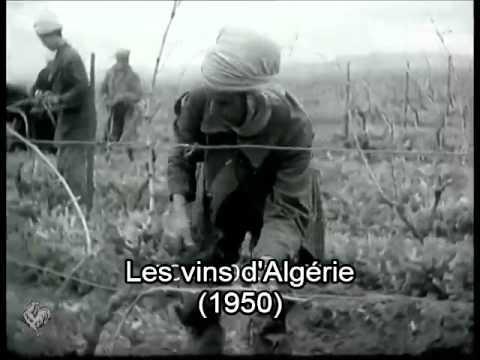 Les vins d'Algérie (1950)