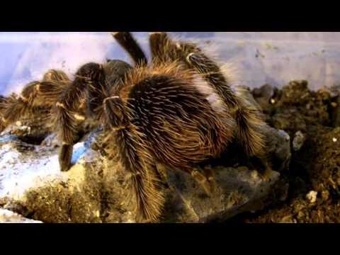 Tarantula Feeding Video 129 Part 2 - Easter Brunch