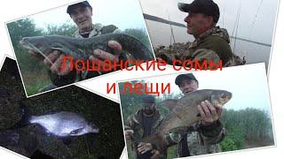За сомом на Лошанское водохранилище Лещ на фидер Рыбалка в Беларуси
