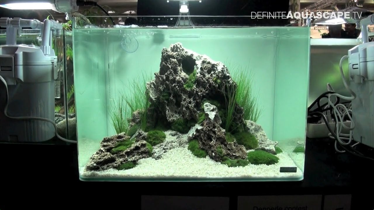 Aquascaping   Qualifyings For The Art Of The Planted Aquarium 2015, Region  North, Nano Tanks, Part 2   YouTube