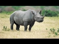 Rhino Jousting
