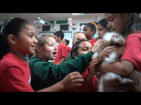 Crayons Christian School | Petland Florida