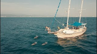 Playing Tag with Dolphins and Whales