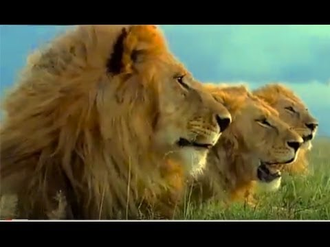 (Documental) - LA PELIGROSA MIGRACION ANIMAL - Africa Salvaje