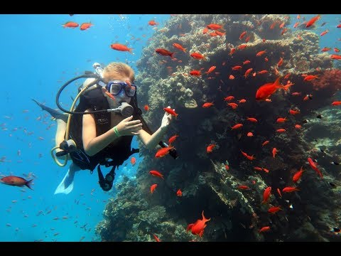 Дайвинг Красное море Египет