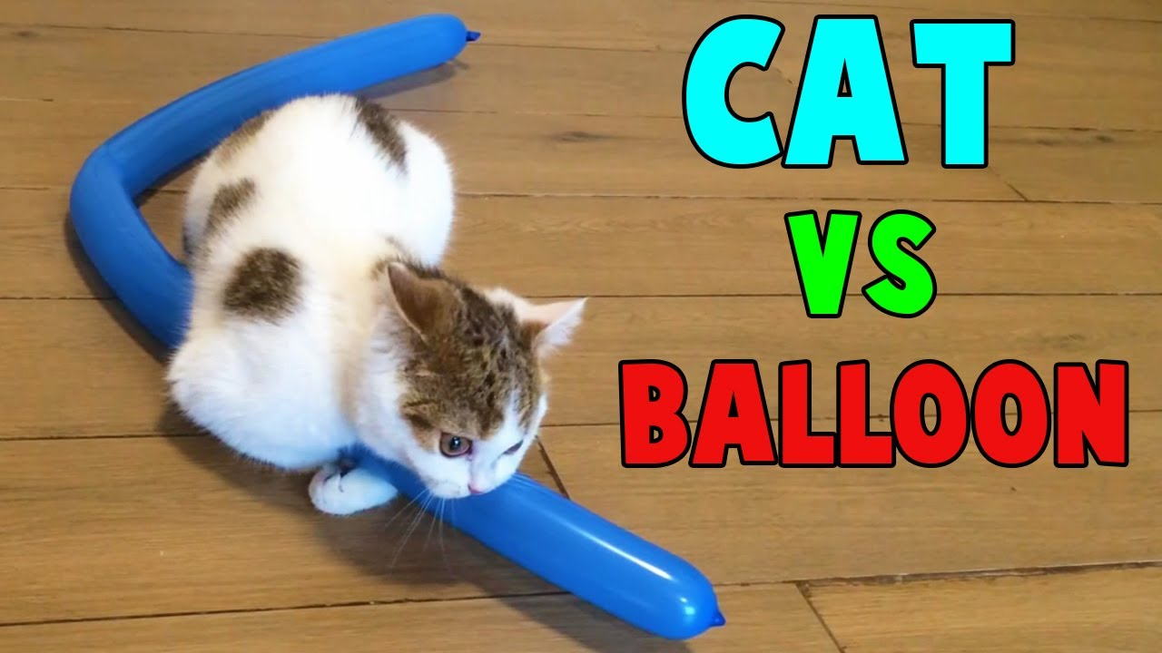 Cutest Cats vs Balloon Funny Cats Playing with Balloon by Animals TV