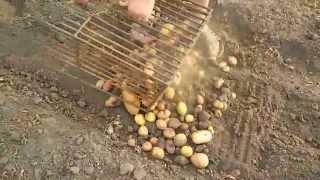 Копка картошки мотоблоком с контейнером для сбора.(Придумали сами, ускоряет копку картошки в много раз. Теперь копаем её с удоволствием. Советую всем !!!!, 2015-08-26T21:13:59.000Z)
