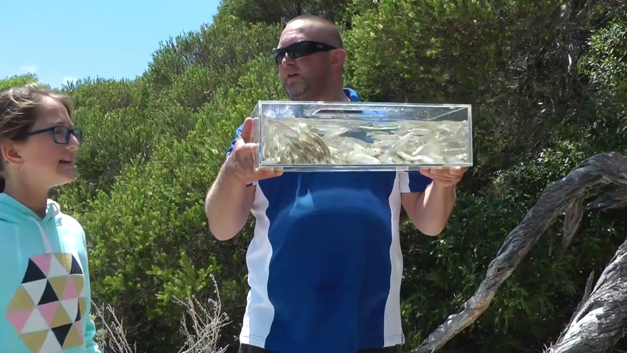 How To Catch Live Poddy Mullet - REEL IT IN