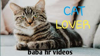 Cat lover cat say don't go | baba hr videos