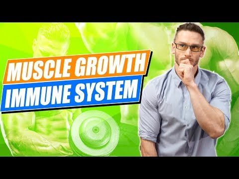 Immune System and Muscle Growth: Understanding IGF-1