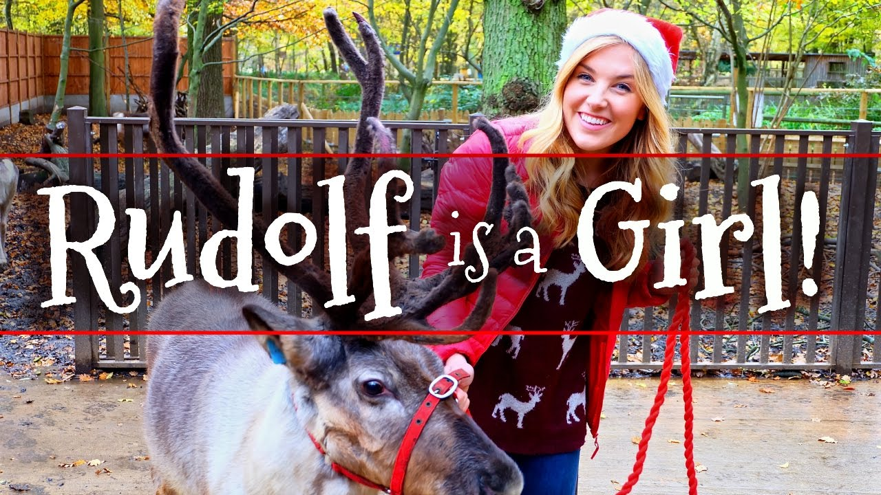 Rudolf is a Girl?! and other Reindeer Facts!  Maddie Moate