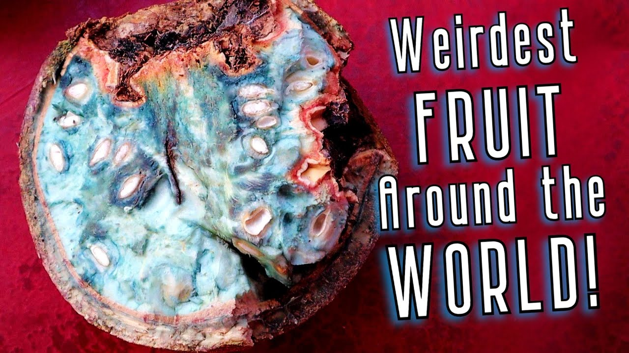 10 of The WEIRDEST Fruit From Around The World (I actually tried them), The Revenge