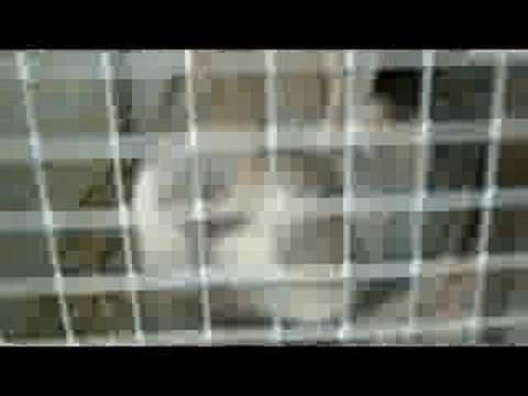 Konijn miauw
