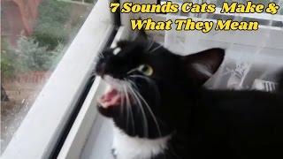 7 Sesler Kediler ve Ne Anlama geldiklerini