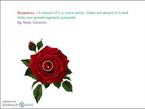 Plant Morphology for NEET and AIIMS (Flower-3)
