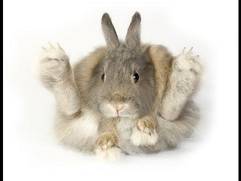 RABBITS - How to hold your rabbit - YouTube