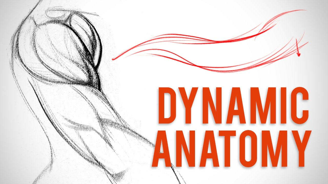 Drawing Dynamic Anatomy - Deltoid Critique - YouTube