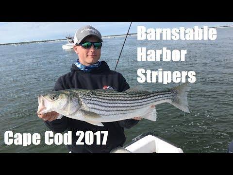 Barnstable Harbor Stripers