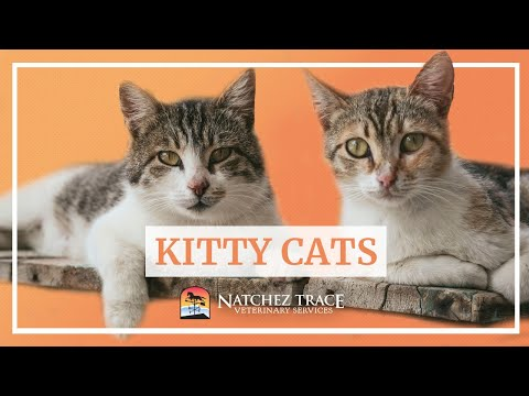 Cat Care in Nashville & Franklin Tennessee - Natchez Trace Veterinary Services