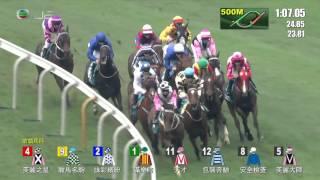 THE CHAMPIONS MILE 冠軍一哩賽 01/05/2016 滿樂時 (MAURICE ) (モーリス )