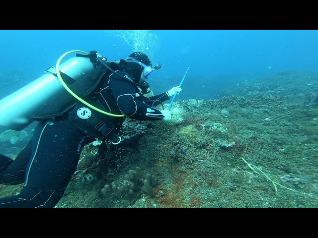 WHAT IS IT LIKE TO HUNT LIONFISH?
