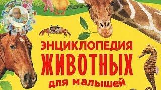 """""""Энциклопедия животных для малышей"""". Лучшая книга про животных для детей!"""
