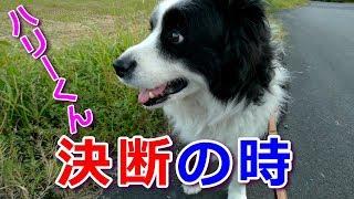 我が家の癒し系愛犬ハリーくんの何時もの散歩コースのターニングポイン...