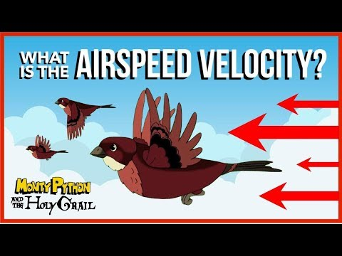 What Is The Airspeed Velocity Of An Unladen Swallow?