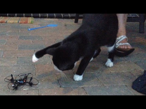 Curious cat vs. drone