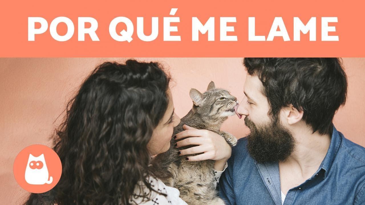 Por Qué Mi Gato Me Lame 6 Motivos Más Comunes Youtube
