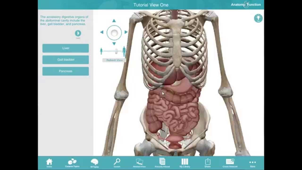 Anatomy & Function - PC/Mac tutorial - YouTube