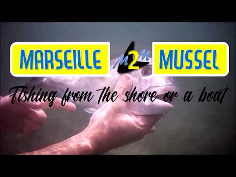 The Marseille Mussel / Lure Special Royal Sea Bream