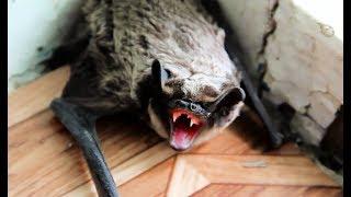 Coole Videos #359: Bat in the house! / Fledermaus im Haus! || ✪ Stern DuTube