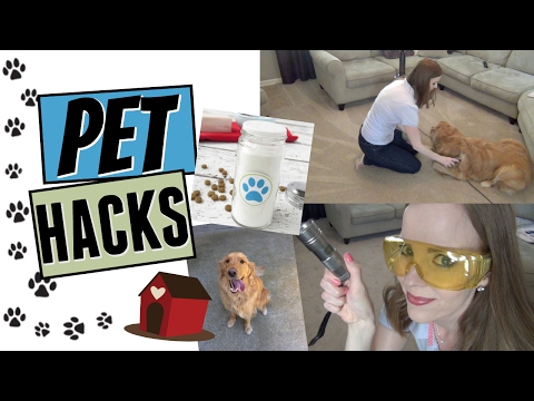 PET HACKS! | HOW TO KEEP YOUR HOUSE CLEAN WITH PETS! | ARE YOU NOSE BLIND?!?