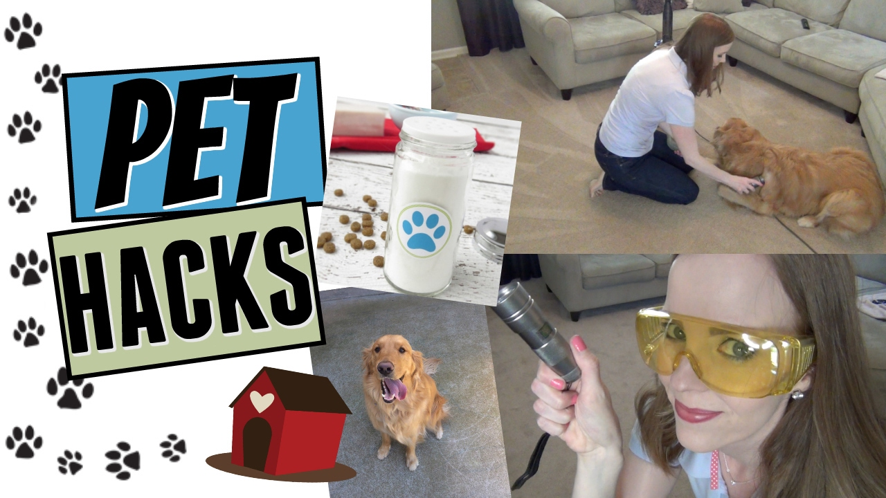 Pet Hacks How To Keep Your House Clean With Pets Are