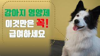 강아지 영양제 추천- 후추와 소금이가 실제로 먹는 7종…