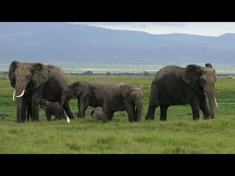 اتفاقية التجارة الدولية تحظر بيع صغار الفيلة البرية المهددة بالانقراض للحدائق…  - نشر قبل 2 ساعة