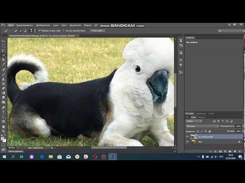 Как вырезать  объект  и переместить его на другой фон  в фотошопе