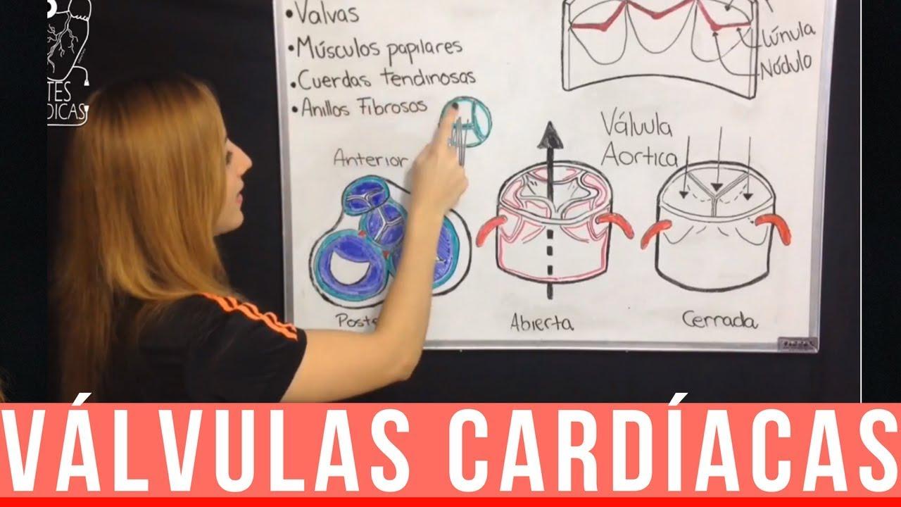 VÁLVULAS DEL CORAZÓN : Mitral, Tricúspide, Aórtica y Pulmonar ...